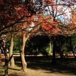 Botanical Gardens of Buenos Aires