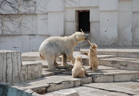 © Sapporo Maruyama Zoo