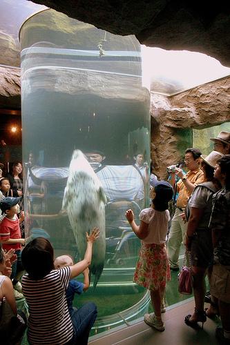 Asahiyama Zoo. Photo: Yoppy