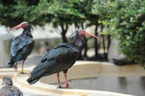 © Nogeyama Zoo