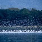 Lake Miyajima