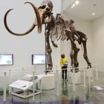 Hokkaido Museum