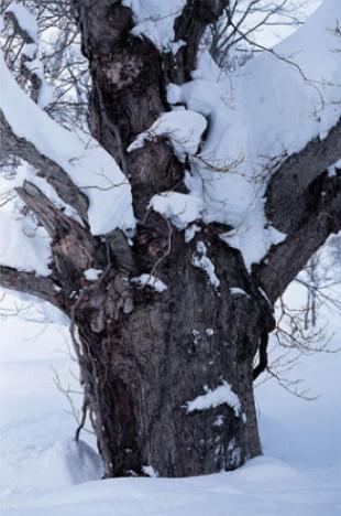渡辺洋一写真展「白い森」