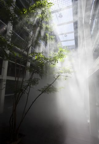 """FUJIKO NAKAYA + SHIRO TAKATANI """"CLOUD FOREST"""""""