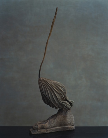 上田義彦写真展「鎮まる」